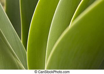 planta verde, cicatrizarse