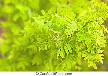 planta verde, cicatrizarse, plano de fondo