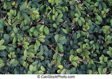 planta verde, cicatrizarse, plano de fondo, original