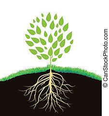 planta verde, com, raizes
