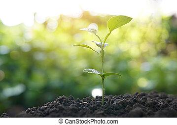 planta verde, crecer, con, sunlight., naturaleza, plano de fondo