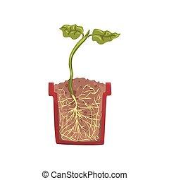 planta verde, crecer, en, un, olla, con, suelo, tierra, etapa, de, crecimiento, olla, en, un, sección transversal, vector, ilustración