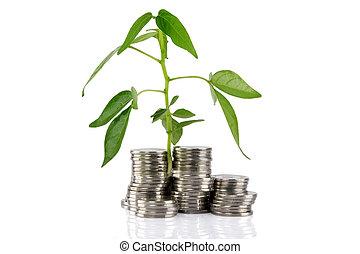 planta verde, crescendo, de, a, moedas