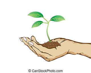 planta verde, crescendo, em, mão