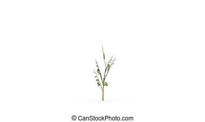 planta verde, crescendo