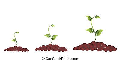 planta, verde, florescer
