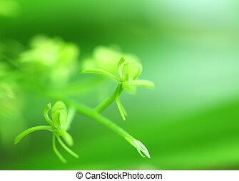 planta, verde, foco