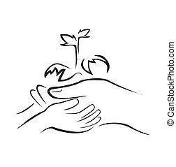 planta, verde, llevar a cabo la mano