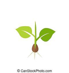 planta, vetorial, seedling., ilustração