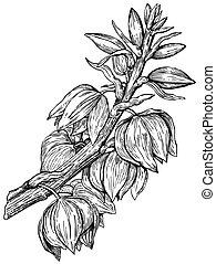 planta, yuca, treculeana