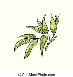 planta, zen, folhas, -, esboço, ilustração, tradicional, vetorial, verde, bambu, bambu, style., asiático