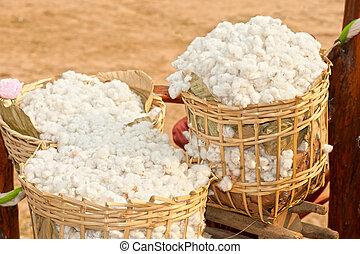 plantación, algodón