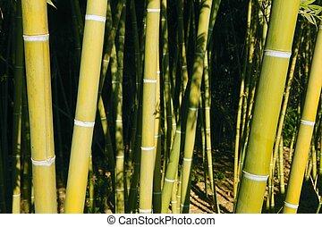 plantación, bambú, bastón, verde