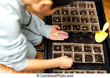 plantación, bandeja., fértil, tierra, manos, semillas, niño...