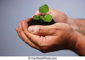 plantación, cubrir, mano