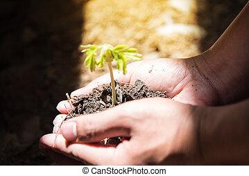 plantación, el, plantas de semilla, en, el, suelo