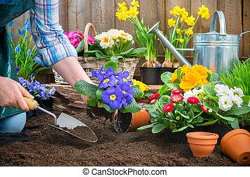 plantación, flores, jardinero