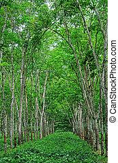 plantación, indonesia, glanmor