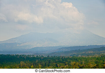 plantación, java, café, indonesia, este