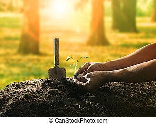 plantación, pretendiente, árbol, contra, mano, semilla, ...