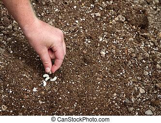 plantación, primer plano, niño, semilla