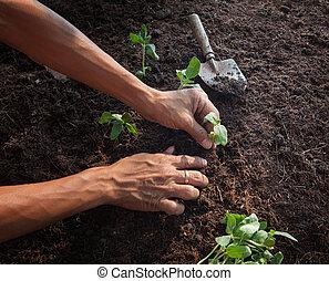 plantación, uso, jardinería, actividades, suciedad, tierra, ...
