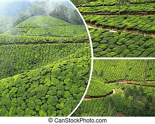 plantaciones,  collage,  -, viaje,  photos),  India,  Munnar,  ), té, Plano de fondo,  (, imágenes,  (my