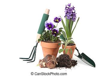 plantaciones, jardinería, primavera, celebrar, nuevo, potted