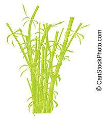 plantage, bambus