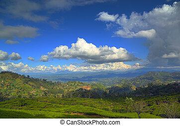 plantage, berglandschaft, tee