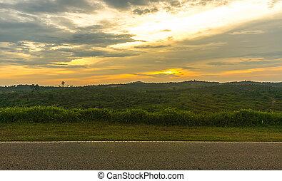 plantage, sonnenuntergang, ölpalme, hintergrund