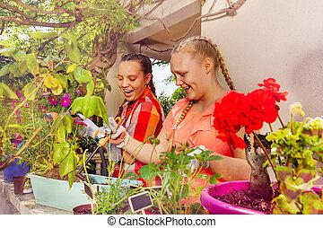 plantande, tonårs- flickor, två, terrassera, blomningen