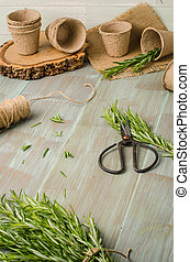 plantande, Trädgård, Trä, rosmarin, bord, redskapen