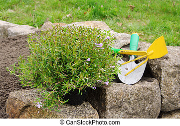 plantar, 01, arbusto