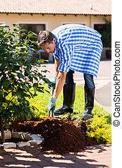 plantar, arbusto, jovem, jardim lar, homem