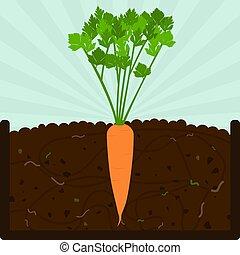 plantar, composto, cenoura, árvore
