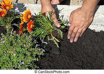 plantar, flores