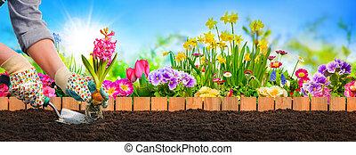 plantar, flores, em, jardim