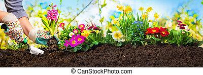 plantar, flores, em, um, jardim