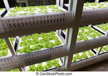 plantar, hydroponics
