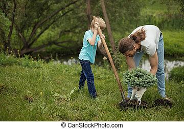 plantar, seu, pai, árvore, filho, park., adulto, ao ar livre, sorrindo