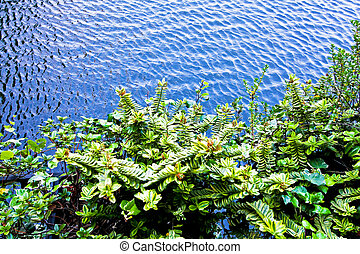 plantas, agua