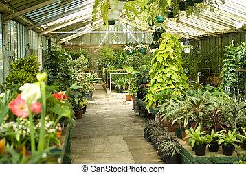 plantas, berçário, estufa, vista