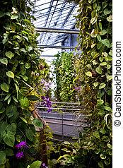plantas, casa, verde