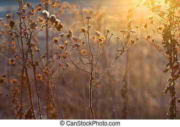plantas, congelado, wintertime, prado, backlight