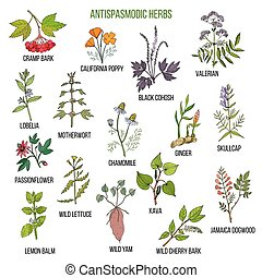 plantas, conjunto, antispasmodic, mano, herbs., dibujado, ...