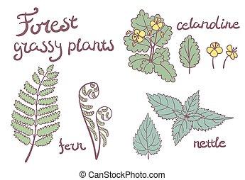 plantas, conjunto, bosque, herboso