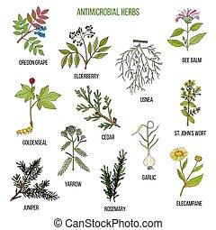 plantas, conjunto, mano, herbs., antimicrobial, dibujado,...