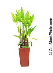 plantas, crecido, jardiniere
