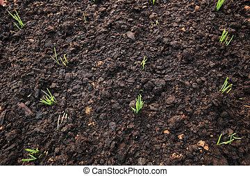 plantas, crecimiento, verde, jardín, puerro